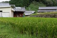 五穀豊穣の予感 - katsuのヘタッピ風景