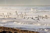 空を駆ける - 綺麗な野鳥たち