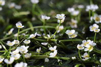 歩き疲れて座りこんだら昔観た花がまた咲いていた - お花畑で微笑んで**