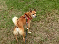 華麗なる飛行犬abby - abby & zack