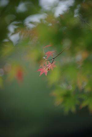 着々と。ー①ー - 陽だまりの小窓 - 菊の花幼稚園保育のようす