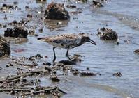 近くで干潟といえば、松永湾 - なんでもブログ