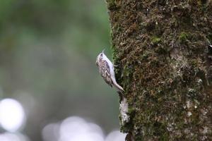 画像整理(2018年9月21日)3 - ほとんど野鳥写真日記