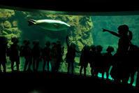 海遊館 - 心の万華鏡2