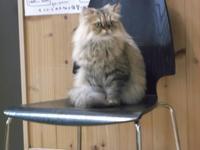 日本ミステリー小説史 - シェークスピアの猫
