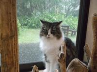 仲代達矢が語る日本映画黄金時代 - シェークスピアの猫