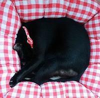 猛暑去る - 黒猫瓦版