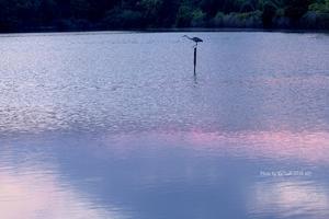 静寂 @ 水上池 と おまけの宮跡彼岸花たぜw - 東大寺が大好き