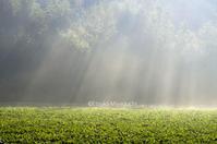 秋、朝霧の季節です。 - ekkoの --- four seasons --- 北海道