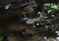 水場の小鳥たち・・・ - 赤いガーベラつれづれの記
