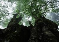 巨樹 - 源爺の写真館