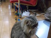 サガン「悲しみよこんにちは」 - ネコと文学と猫ブンガク