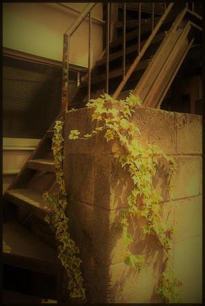 駒込界隈 -37 - Camellia-shige Gallery 2