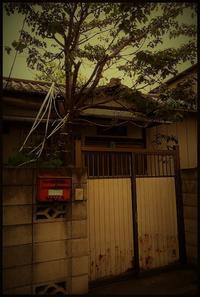 駒込界隈 -38 - Camellia-shige Gallery 2