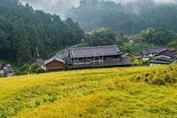 奈良にも実りの秋 - toshi の ならはまほろば