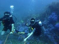 Aowとファンダイビング同時進行! - タイのタオ島から、たおみせブログ