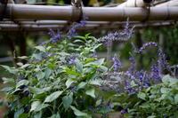 里山の花 - エンジェルの画日記・音楽の散歩道