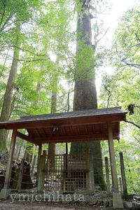 大杉神社 - みちはた写真館フォトギャラリー