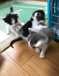 子猫の沐浴 - gin~tetsu~nosuke