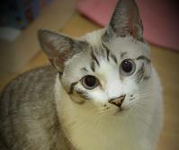 試着室 - ぎんネコ☆はうす