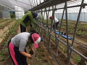 真紅の美鈴定植・農福連携請負作業・米ヌカ回収 - ジョブファーム活動ブログ