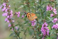 花と蝶 - 菜奈ちゃんコーナー
