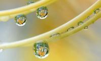 雨粒の旋律 - 旅のかほり