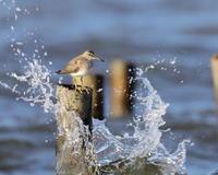 水より人 - 綺麗な野鳥たち