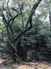 秋雨前線 - Kaz's Blog