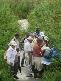 【第6回霞ヶ浦自然観察会「湖岸植生帯はどのように再生していくのか」を実施しました。】 - ぴゅあちゃんの部屋