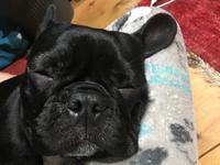 1809-135:わがまま犬と暮らしてみるのも良いと思う。 - ブーヤンとボク☆達との日々