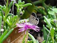 買い物帰りに花と蝶々撮りました。 - 写真と画像 Illustrator&Photoshopで楽しんでます! ネイル画像!