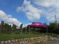奥野田ワイナリー収穫祭カベルネ・ソーヴィニョンが最後です。 - のび丸亭の「奥様ごはんですよ」日本ワインと日々の料理