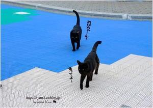 黒猫さんを独り占め - 4にゃん日記+