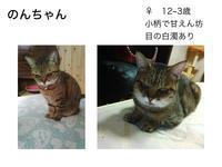 【6匹の猫紹介】 - 習志野置き去りねこ