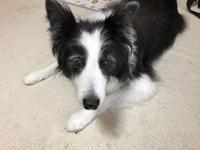 老犬介護 - 犬とお散歩
