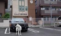 なつかし散歩 - 小太郎の白っぽい世界