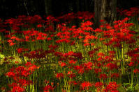 紅々 - ノッツォのホデナス