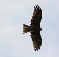 今日の鳥さん180913 - 万願寺通信