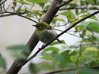 今日の鳥さん180922 - 万願寺通信
