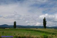 マイルドセブンの丘とポプラ - My favorite ~Diary 3~