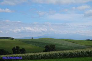 マイルドセブンの丘とポプラ -