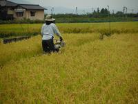 雨の合間に稲刈りが無事終わりました - 信州ピース&ナチュラルだより