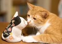 三年遅れの猫日記-41- - 猫と夕焼け