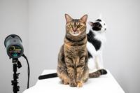 (季節外れですけど)成人式の写真 - 猫と夕焼け