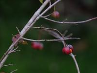 秋の草花 - ブナの写真日記