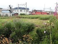 藤田八束の鉄道写真@青森で撮影した美しい花と貨物列車、可愛い花と貨物列車の写真・・・千刈小学校踏切、美しい花園、ガーデニング - 藤田八束の日記