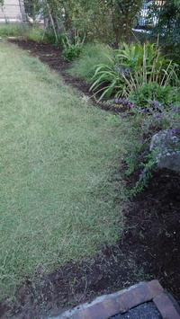 端切りとベアグラス - うちの庭の備忘録 green's garden