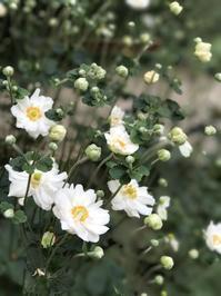 バッサバッサと庭仕事 - 幾星霜