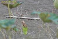 初見初撮り - 奥武蔵の自然